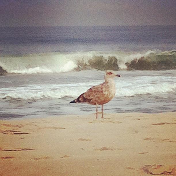 September's Seaside (credit ⚓ René Marie Photography) ⚓ Beach Cottage Life ⚓: Beaches Beaches Beaches, Beaches Wildlife, September Seaside, Seaside René, Cottages Life, Beaches Stuff, Seaside Credit, Beaches Art, Beaches Cottages