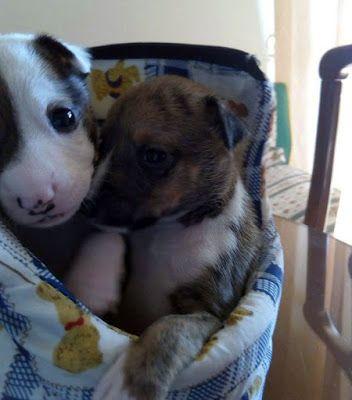 CACHORROS EN ADOPCIÓN: En adopción cachorro macho de menos de un mes