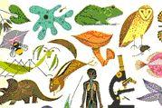 Zoologia - Biologia, animais invertebrados e vertebrados