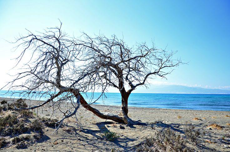 chrissi island - crete!