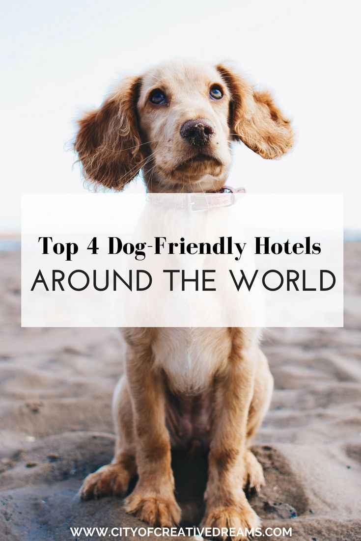 Top 4 Dog-Friendly Hotels Around The World - City of Creative Dreams dog friendly hotels road trips, dog friendly hotels pets, dog friendly hotels travel, dog friendly hotels vacations