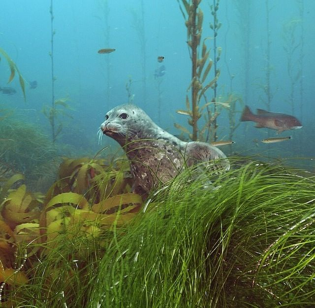 aquatic animal essay Water or aquatic animals are either vertebrate or invertebrate animals, which live  in water all through or most of their lives these animals may.