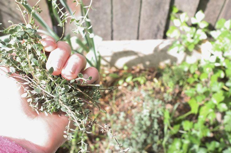 Beautiful lemon thyme recipe | Beautiful | Pinterest