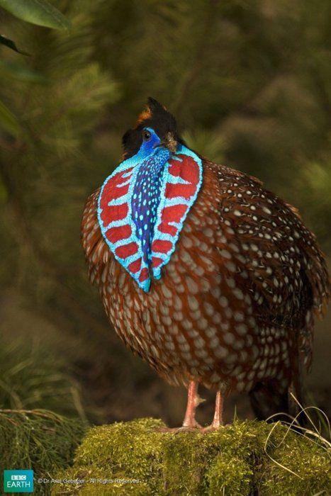 10 dos animais mais coloridos do mundo                                                                                                                                                      Mais