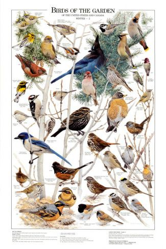 Birds of the Garden
