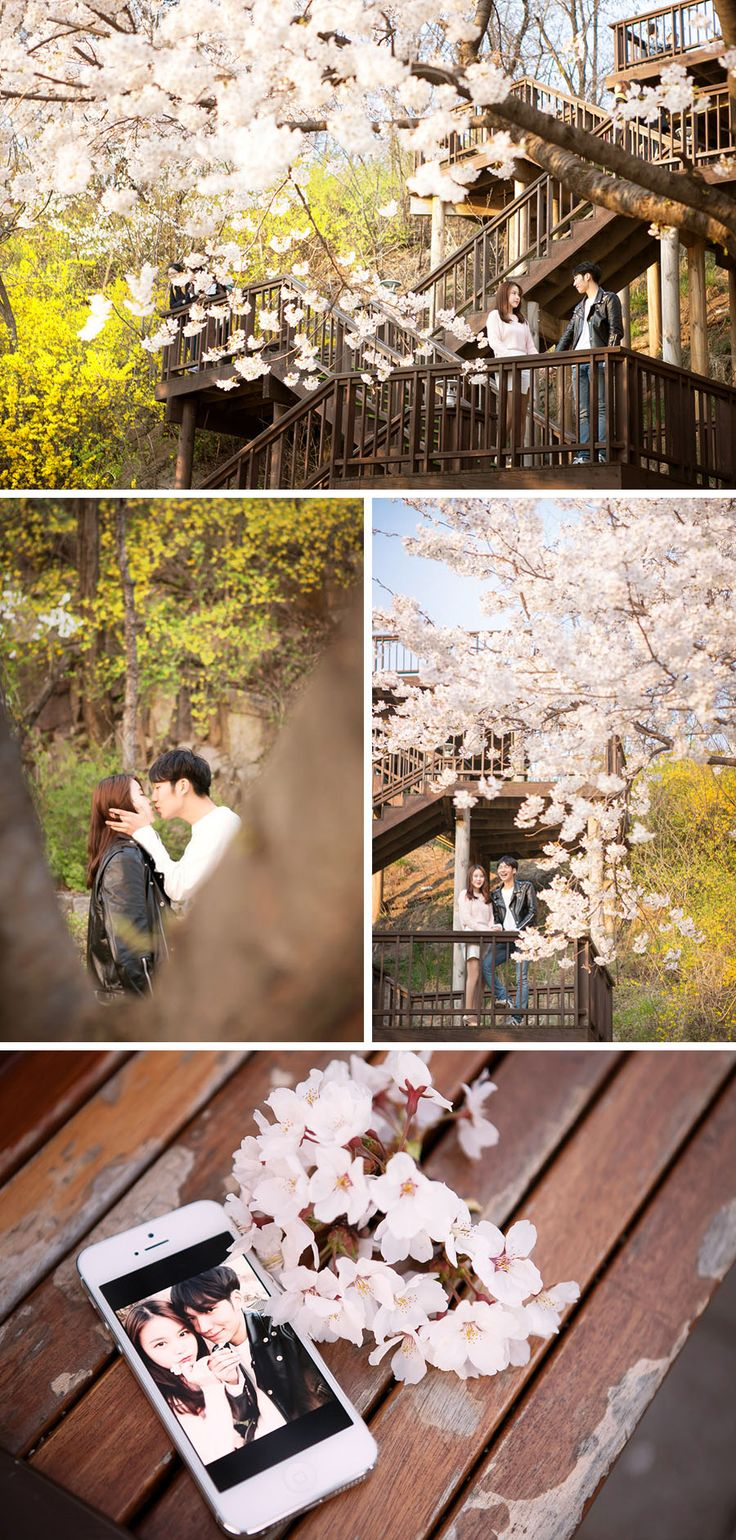 Plenty of places to view cherry blossoms in Korea, but which spots are suitable for your wedding photoshoot? Read our guide to find out more!