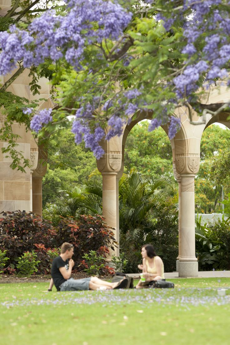 Jacaranda flowers  Two students sitting on the grass in the Great Court, with Jacarandas and sandstone backdrop  Copyright 2013 The University of Queensland, all rights reserved