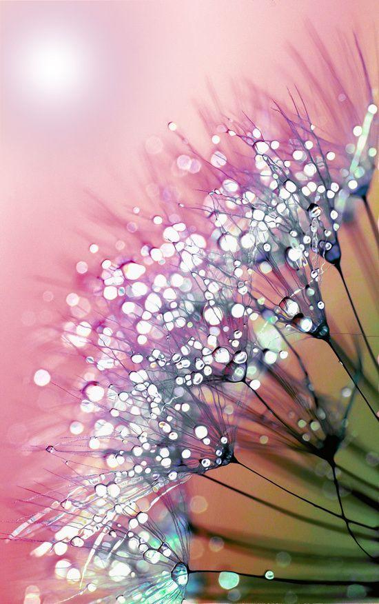 Bellasecretgarden — phinilez: rainbow dandelion by Joke Vermeer More