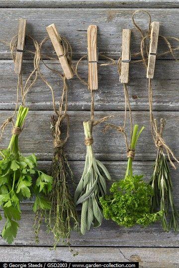 Je kruiden aan een lijntje. #kruiden drogen #herbs #moestuin