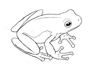 How To Draw A Frog | Draw Central