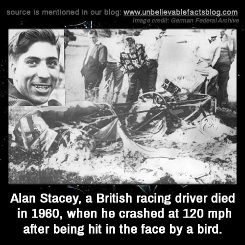 Alan Stacey, a British racing driver died in 1960, when he crashed at 120 mph after being hit in the face by a bird.