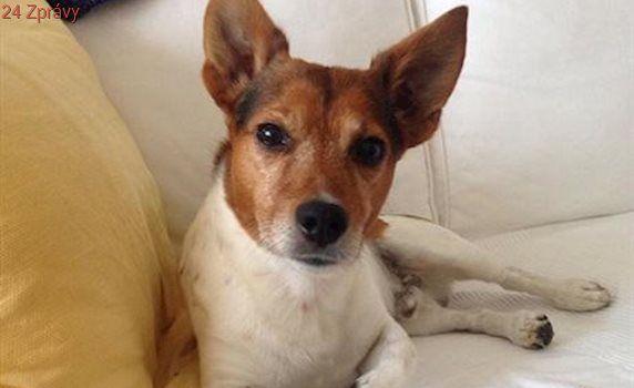 Ve zlínském útulku loni přibylo psů, zájem je i o psí hotel