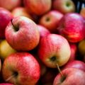 October Events in Salt Lake City - Halloween, Oktoberfest, and more!: Farmers Markets
