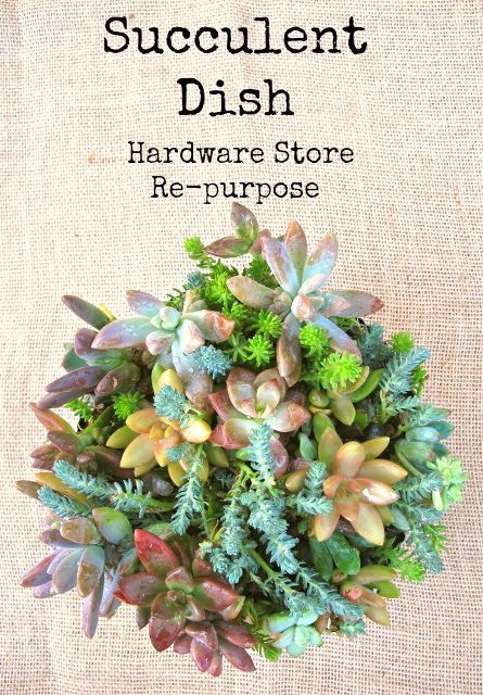 diy gorgeous succulent garden repurpose