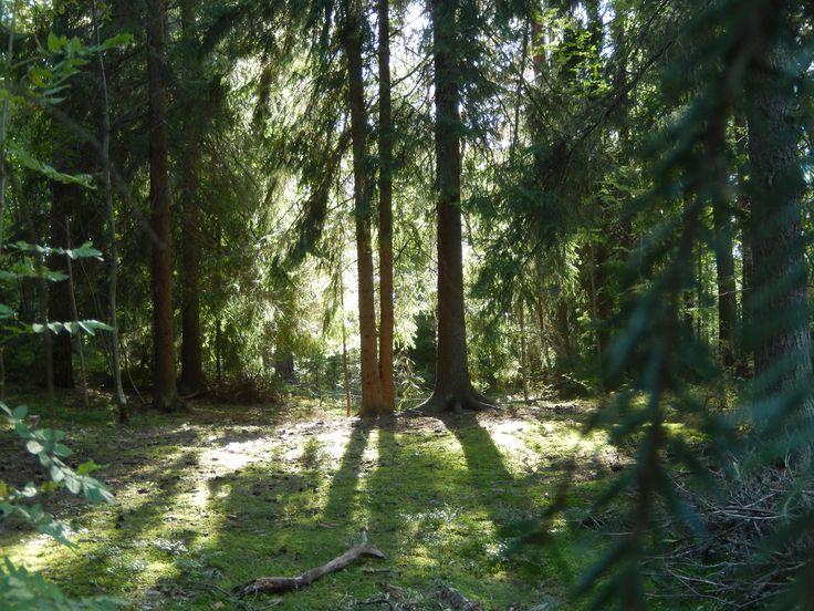 Metsäkylpy. Hämeen Luontokeskus. Vihreät Tassut. Maksuton metsäkylpy metsän Tapion tyyliin la 18.6.2016 klo 14-15 luontokeskuksella. Tervetuloa.