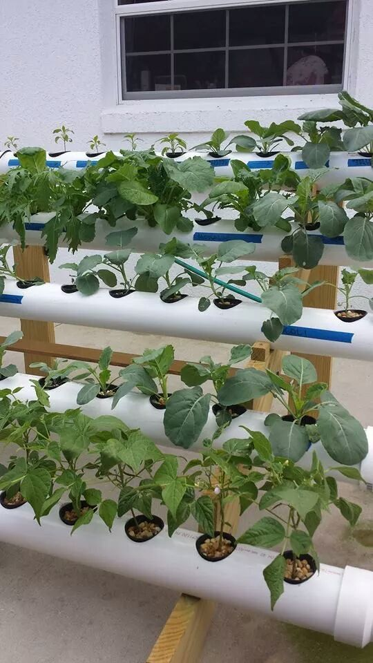 DIY Hydroponic garden Great for water thirsty plants like