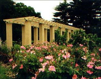 El Paso Municipal Rosa Garden | Places To Go Near Me! | Pinterest | El Paso,  Memorial Park And El Paso Texas
