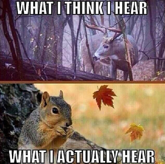 What you hear hunting