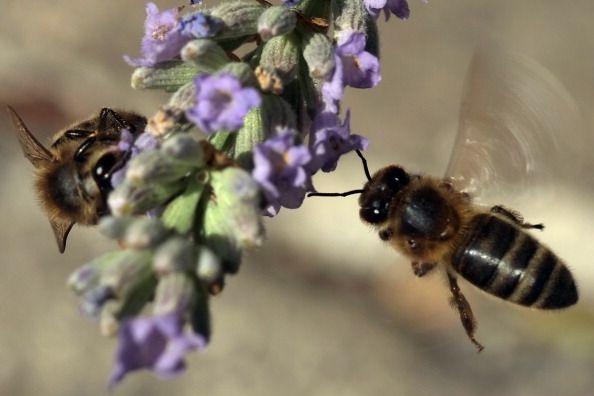 Acupuntura com ferrão de abelha cada vez mais popular na China   #Abelhas, #Acupuntura, #Agulha, #China, #Ferrão