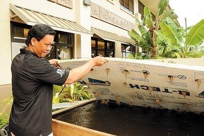 17 best images about aquaponics gardening on pinterest for Aquaponics hawaii