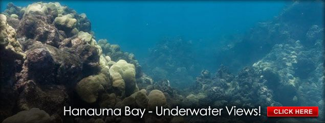 What I love doing most- SCUBA in Hawaii