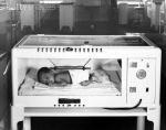 armstrong incubator!