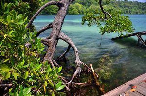 Lagune of Kakaban Island, Kalimantan, Indonesia, by Ivonne Peupelmann