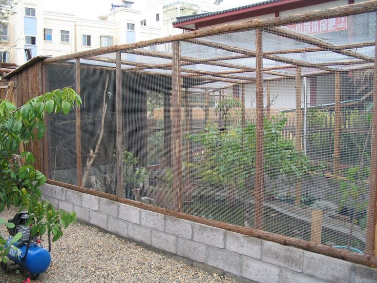 Pin By Raising Parrots On Parrot Cages