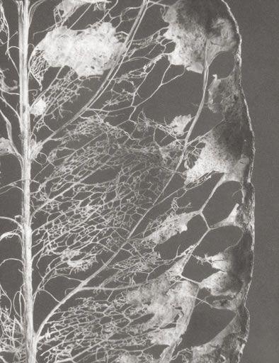 yama-bato:    Rondal Partridge    Decaying Leaf, 1995