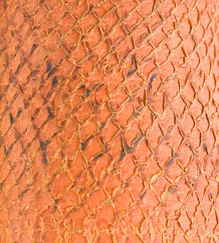 tangerine pumpkin fish skin