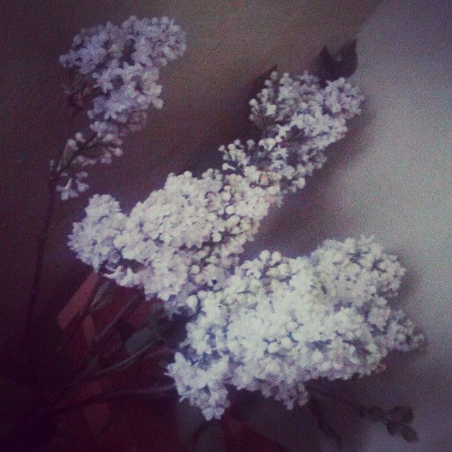 #white #brown #green #flower