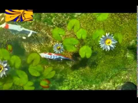 Koi FishTank Relaxing Japanese Koi - Song: Are We.  Featuring Gardens Of...