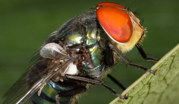 Forensic entomology and the use of gas chromatography-mass spectrometry in determining the age of insects to aid in forensic investigations. Click through to read article