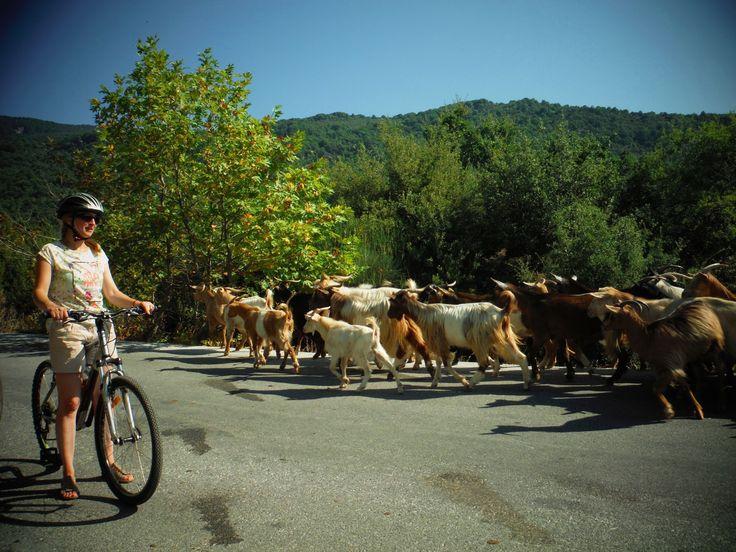 Tailor Made Biking Tour - Pelion - Greece