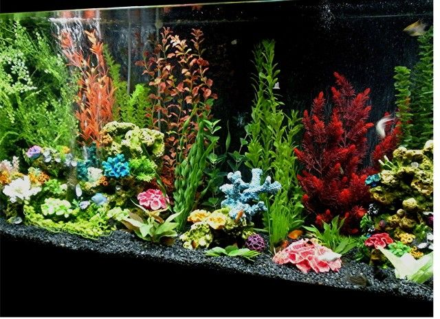 how to change the water for tropical fish