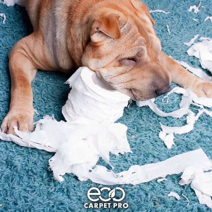 If only she used the toilet paper on the other end.  Learn more about our carpet cleaning services: http://bit.ly/1OI4uYj