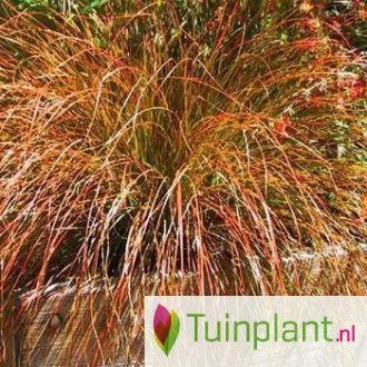 40 best grassen/zon/evergreen images on Pinterest | Evergreen ...
