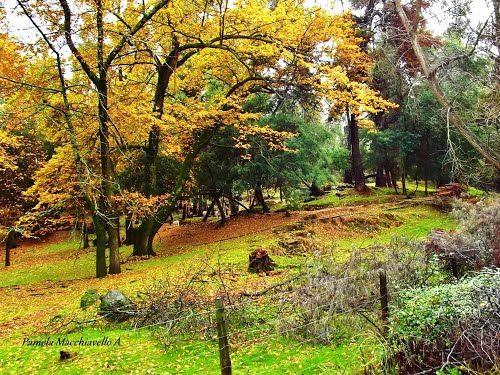 Panoramio - Photos by Pamela Macchiavello > best