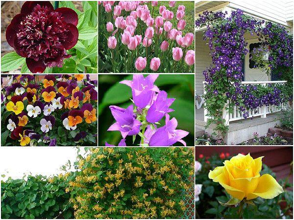 Сад для аллергика - организация и выбор растений