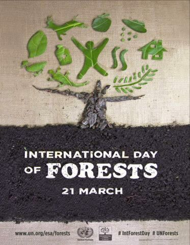 International Day of Forests #UNForests