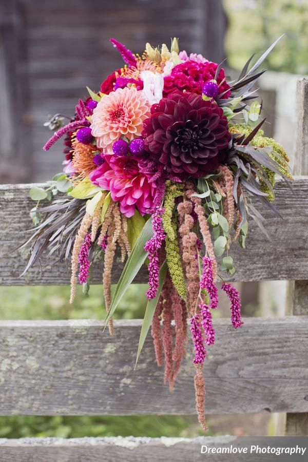 Jewel toned bridal bouquet featuring burgundy, fuchsia, and coral dahlias, and hanging amaranthus.