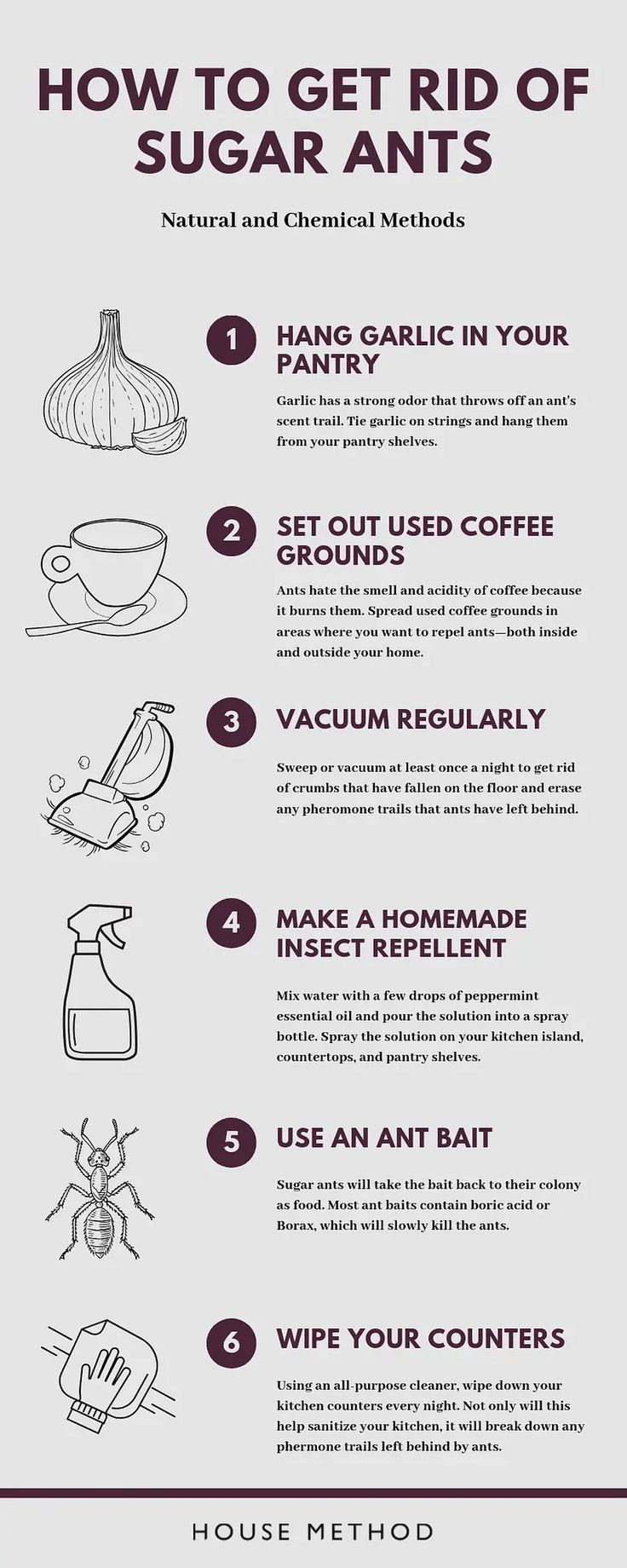 How to Get Rid of Sugar Ants House Method in 2020