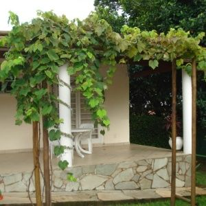 BSB Jardins e Paisagismo
