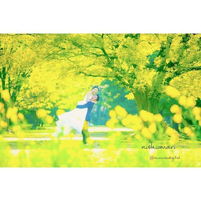 【nishio.sunrise】さんのInstagramをピンしています。 《きいろでいっぱいの世界✳︎ 元気がでる色‼︎ . 考えるより、つくり込むより、瞬発力な写真。 考えたり、思ったり、作ったり、色んな私が撮ってるので、自分で撮ってても、同じのは、ほぼ撮れない(^ω^)笑 . ✳︎✳︎✳︎✳︎✳︎✳︎✳︎✳︎✳︎✳︎✳︎✳︎✳︎✳︎✳︎✳︎ #sunrisedigital #サンライズデジタル #名古屋の写真屋さん #ウェディング#ウエディングドレス#タキシード#ブーケ#楽しい#しあわせ#エンゲージリング#wedding#love#ロケーション撮影#ロケーションフォト#locationphoto#結婚式#結婚#笑顔#花嫁#DIY#プレ花嫁#前撮り#2017#青空#芝生#公園#きいろ#森#花#抱っこ》
