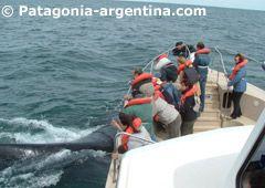 Whale Watching Excursion--Punta Tombo