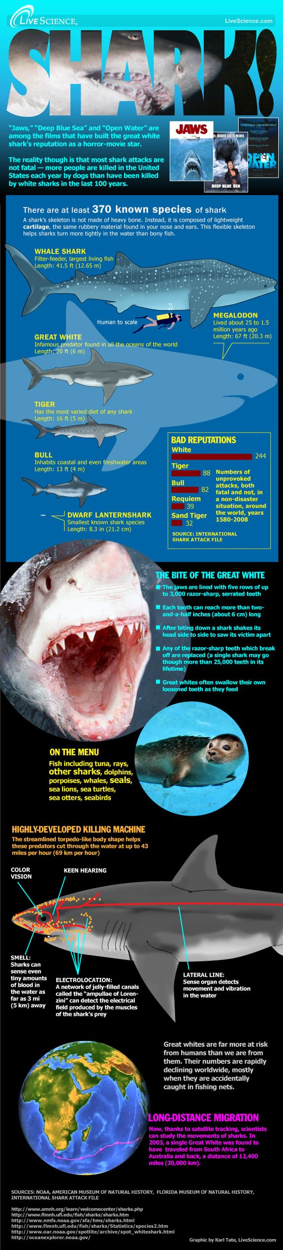 Great white shark christmas ornaments - Shark Science Infographic