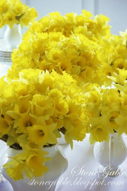Mazzi di narcisi gialli