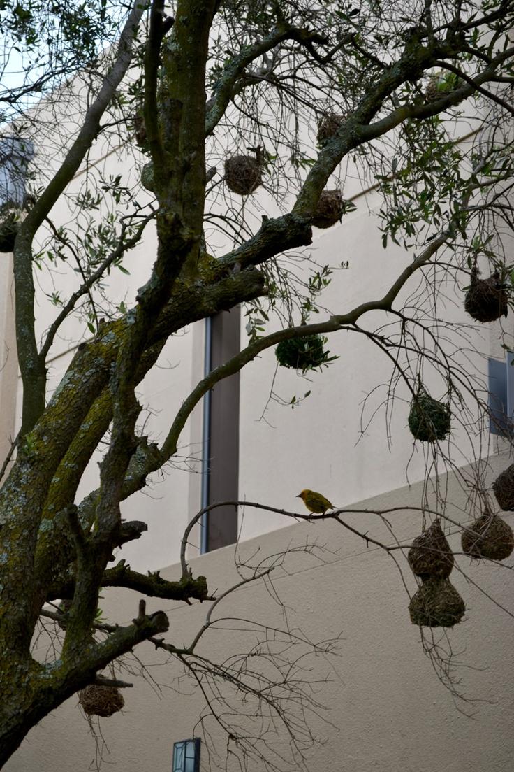 Birds nesting.