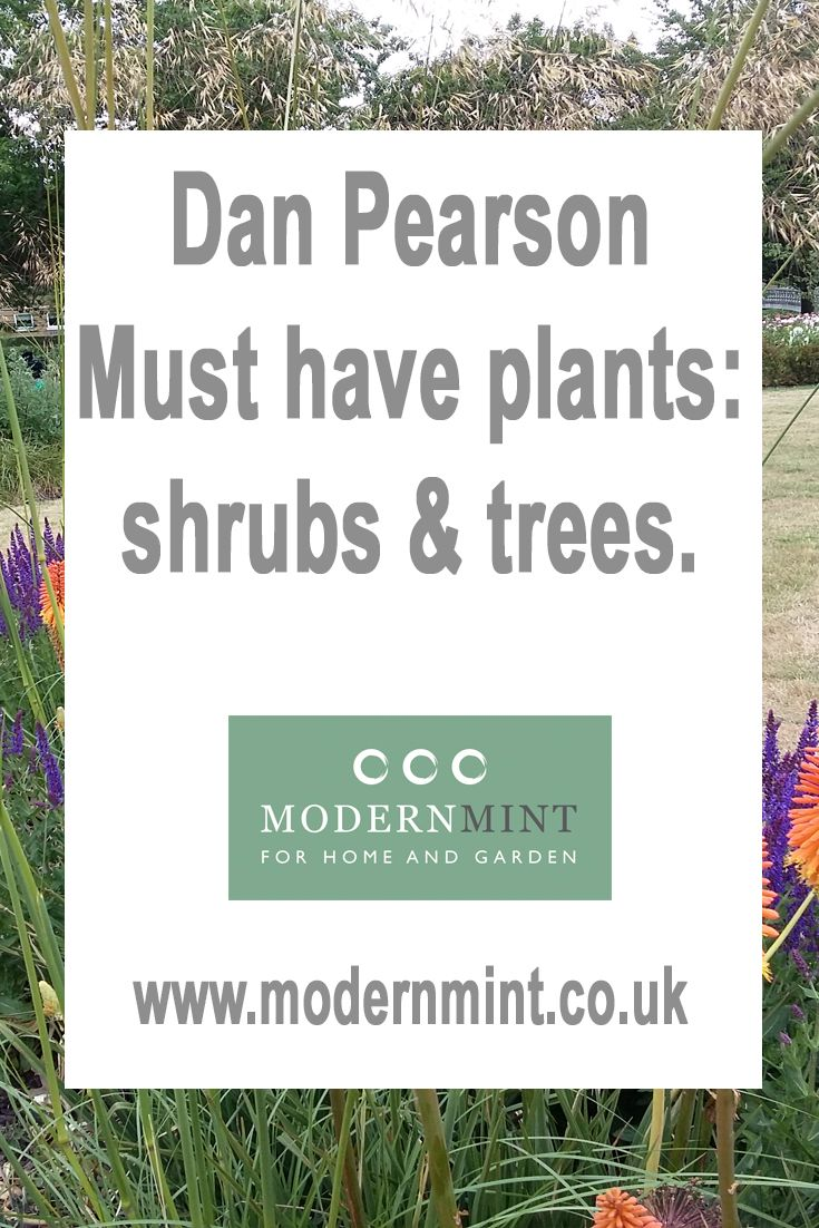 A list of Dan Pearson's must have shrubs and trees. Click here to find out or pin and save to read later!