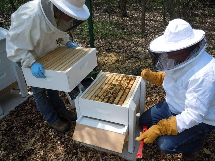 Danielle Hlava and Carl Gorra tend the bees in May at the Naperville Garden Plots.